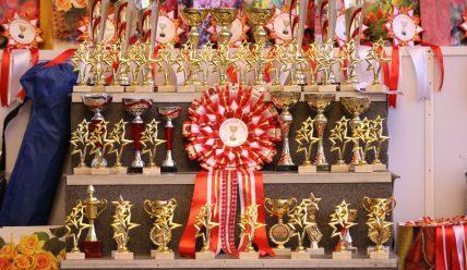 4.11.2017 Региональная выставка собак всех пород ранга САС