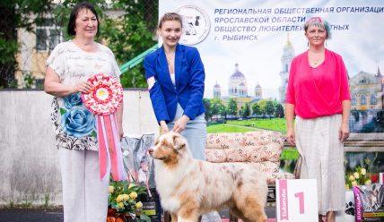 22 июня 2019 Всероссийская Выставка собак г. Рыбинск